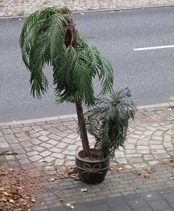 Palme vor dem Haus.