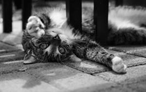 Katze - Spielpause