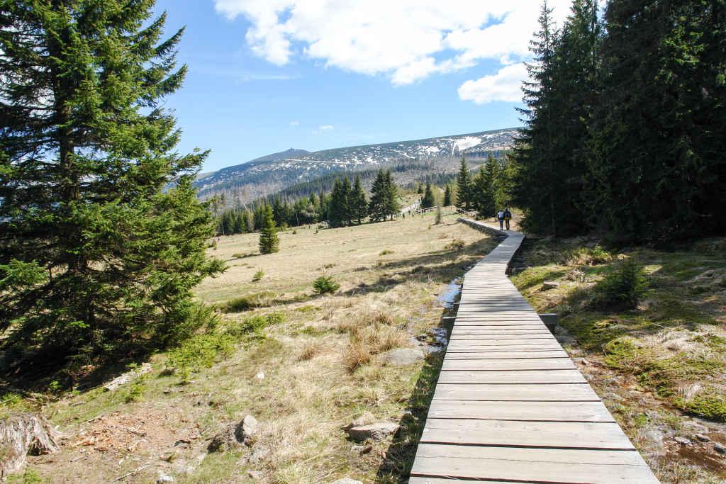 Sumpfige Waldwiese (Polana) im Riesengebirge