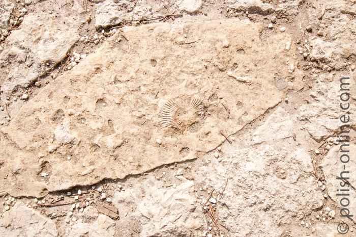 Versteinerter Abdruck einer Muschel im Kloster Tyniec