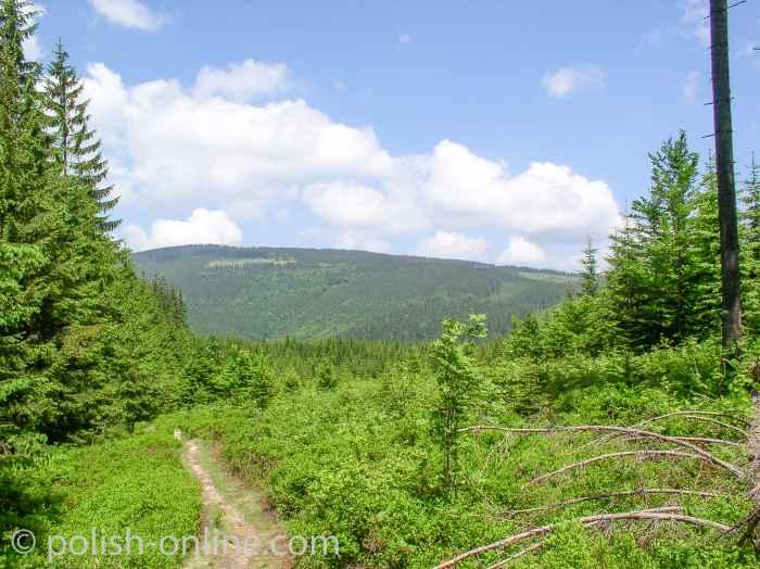 Foto von einem Wanderweg durch einen Wald in den Beskiden