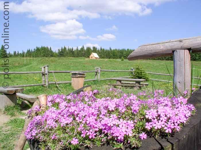Blumenpracht vor der Baude Krawców Wierch Beskiden