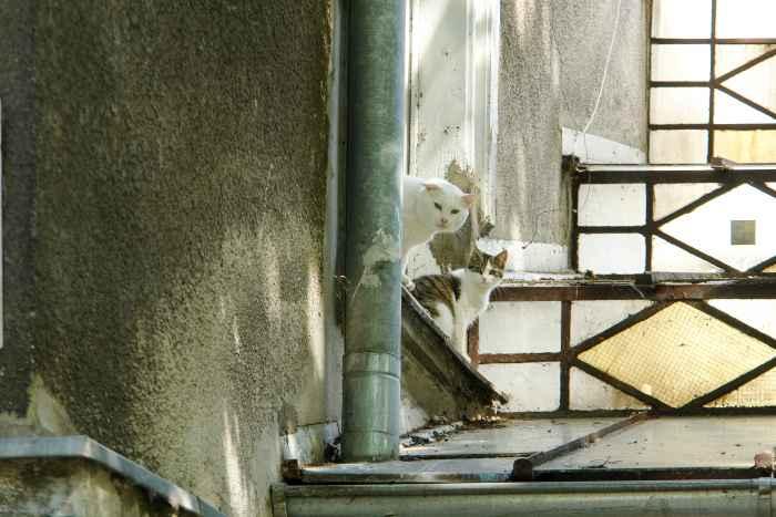 Katzen auf Fensterbänken