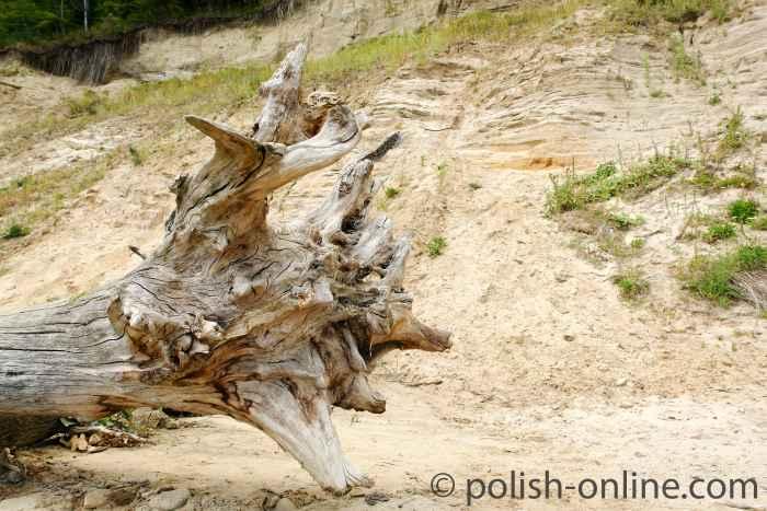 Verrotteter Baumstamm an der Hochredlauer Kämpe
