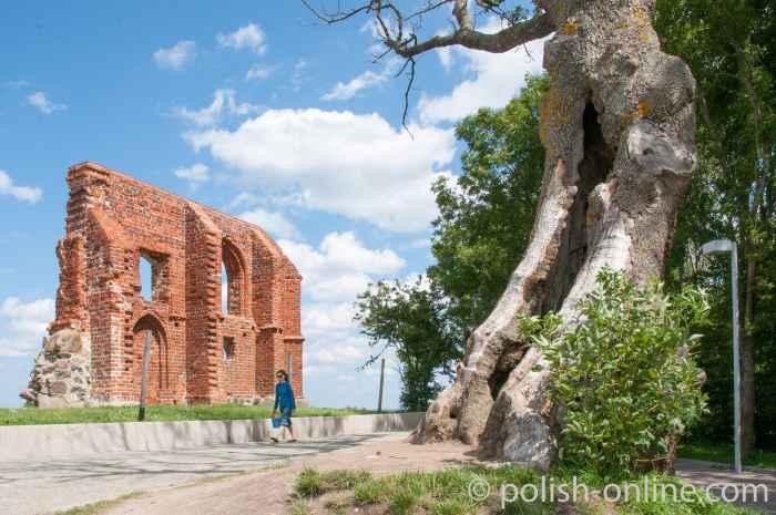 Knorriger Baum neben Kirchenruine in Hoff