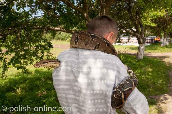 Mann mit einer Riesenschlange