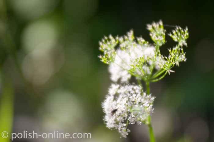Fliege auf einer Blume