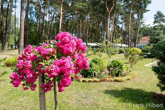 Park des Militärkrankenhauses Groß Born (Borne Sulinowo)