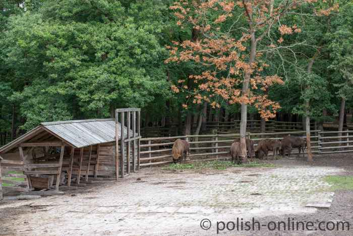 Wisentgehege im Nationalpark Wollin in Polen