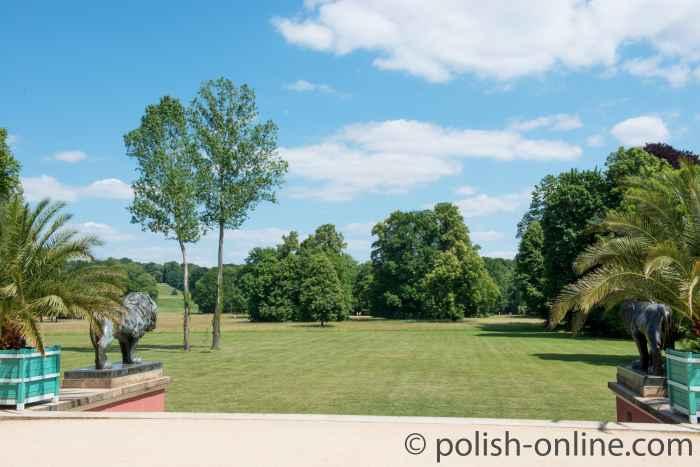 Foto von einer Löwenplastik Fürst-Pückler-Park