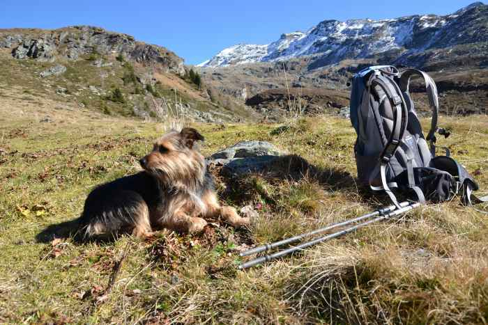 Ein Hund sitzt neben einem Rucksack im Gebirge