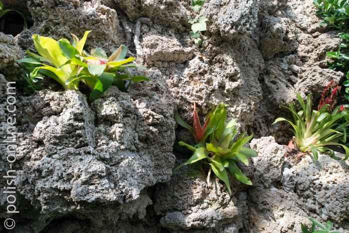 Exotische Pflanzen im Palmenhaus in Waldenburg