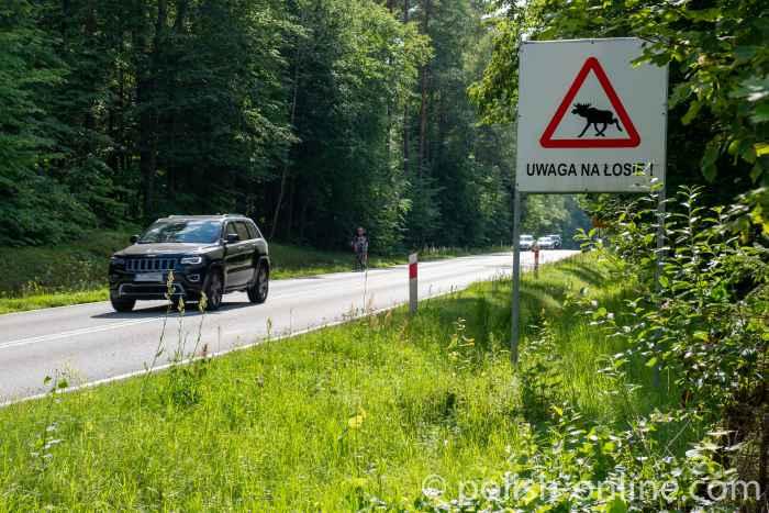 Warnschild Vorsicht Elch in der Nähe von Eckersberg in Masuren