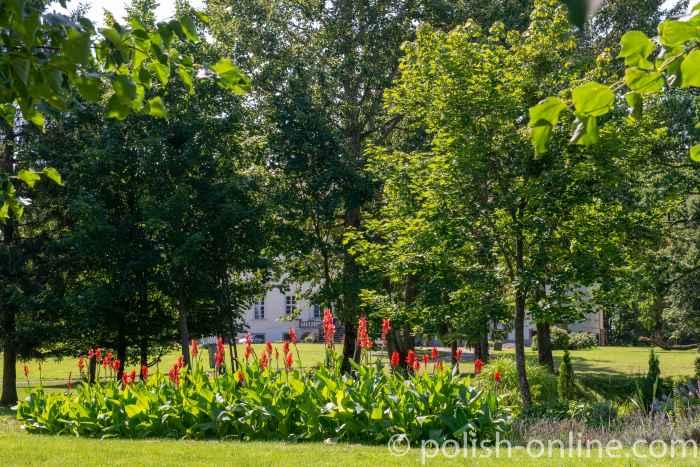 Lilien vor dem Schloss in Eichmedien (Nakomiady)