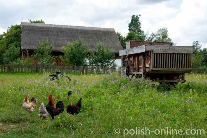Hühner im Freilichtmuseum Hohenstein (Olsztynek)