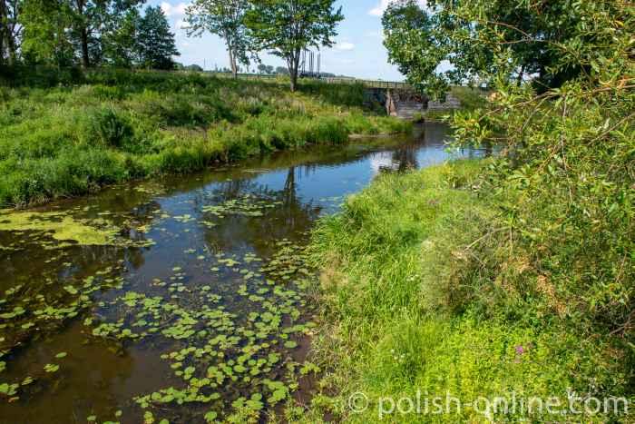 Seerosen auf dem Fluss Angerapp am Rande des Dorfes Groß Medunischken