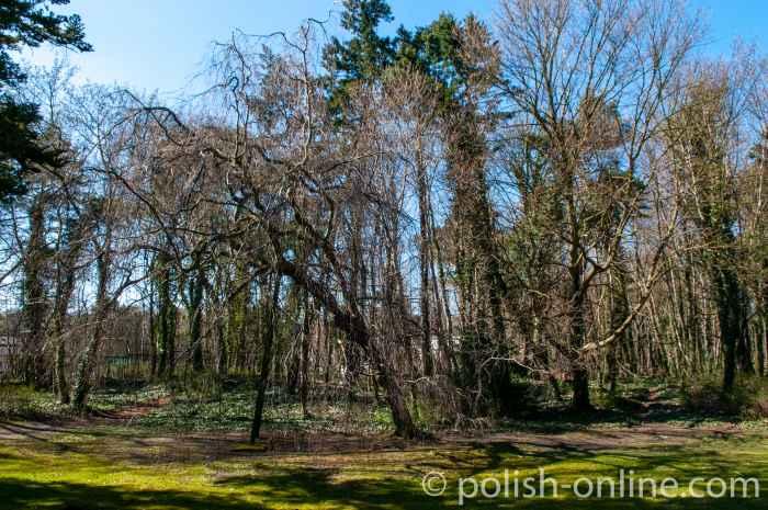 Bäume im Kurpark in Swinemünde