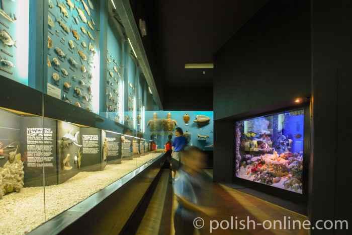 Aquarien und Informationstafeln im Meeresaquarium in Gdingen