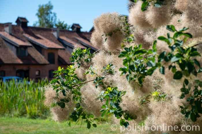 Zierstrauch vor dem Hotel in Gallingen (Galiny) in Masuren