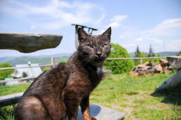Katze nahe einer Berghütte in den Beskiden