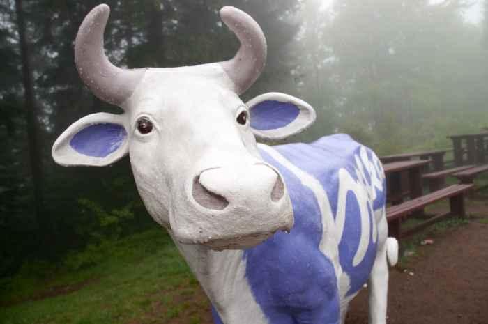 Lila Kuh aus Kunststoff in den Beskiden