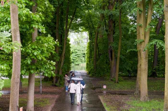 Baumallee im Schlosspark Wilanów in Warschau
