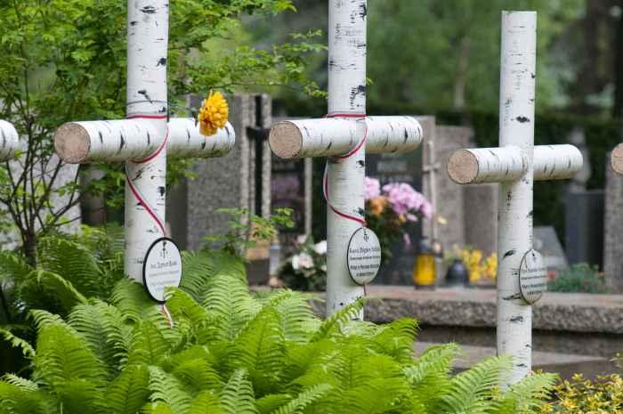 Birkenkreuze auf dem Powazki-Friedhof in Warschau