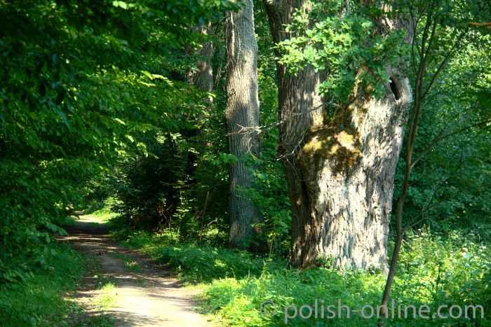 Schlosspark in Steinort (Sztynort) mit Eichen