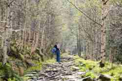 Birken säumen einen Wanderweg im Riesengebirge