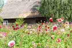 Garten mit Feldblumen im Freilichtmuseum Wdzydze Kiszewskie