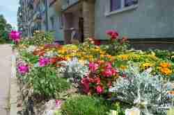 Blumenpracht in Groß Born (Borne Sulinowo)