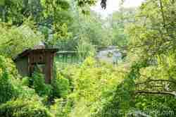 Zugewachsenes Grundstück in Tempelburg