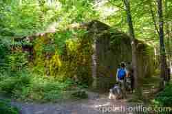 Schutzbunker im Mauerwald in Masuren