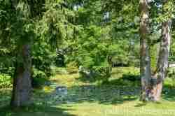 Seerosen vor dem Schloss in Eichmedien (Nakomiady)
