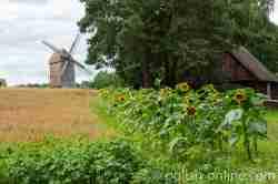 Bockwindmühle im Freilichtmuseum in Hohenstein