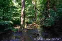 Fluss Blinde (Błędzianka) im Schatten von Bäumen