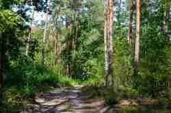 Wald bei Sobibór in Polen