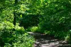Weg durch einen dichten Wald in Masuren bei Pfeilswalde