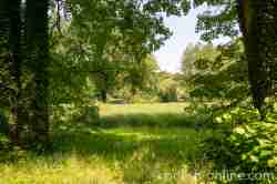 Lichtung im Schlosspark von Kurnik (Kórnik) in Großpolen