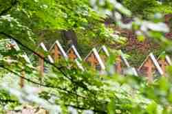 Grabkreuze auf dem Soldatenfriedhof Nr. 122 bei Łużna