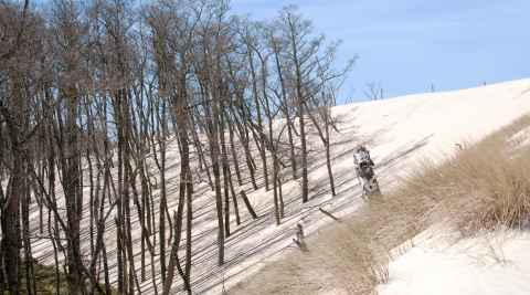 Wald im Slowinzischen Nationalpark wird unter einer Wanderdüne begraben