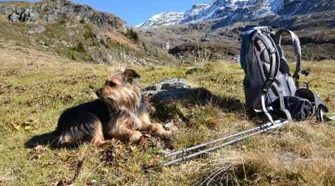 Ein Hund sitzt auf einer Wiese im Gebirge neben einem Rucksack Haustiere