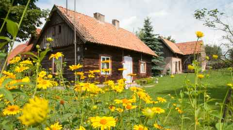 Blumen in einem Garten in Liebenberg (Klon)