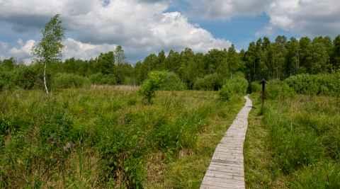 Hölzerner Wanderweg durch Sumpfgebiet