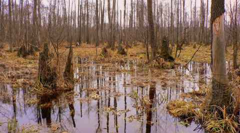 Sumpflandschaft im Kampinos-Nationalpark