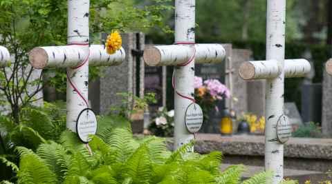 Birkenkreuze für Gefallene auf dem Powązki-Friedhof in Warschau